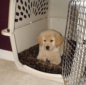 como educar a un cachorro con el cajón