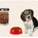 Alimentación de cachorros en la etapa de crecimiento