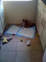 como enseñar a un cachorro a hacer sus necesidades