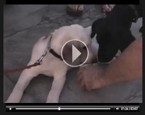 Video El Encantador de Perros