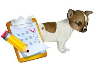 Como educar a un cachorro a una rutina diaria