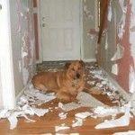 4 Tips para Evitar la Ansiedad por Separación en Perros Cachorros