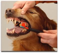 Como Cepillar los Dientes a un Perro