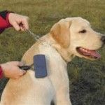 Como Cepillar a un Perro Cachorro