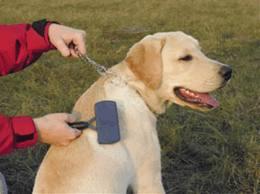 como cepillar a un cachorro