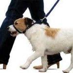 como pasear a un perro