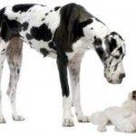 La Llegada de otro Perro en Casa. Como Presentar un Cachorro a un Perro Adulto