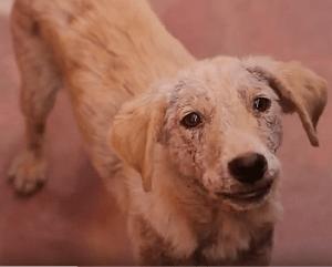 Perros casero sarna tratamiento
