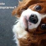 Consejos Importantes para Adoptar un Perro Cachorro