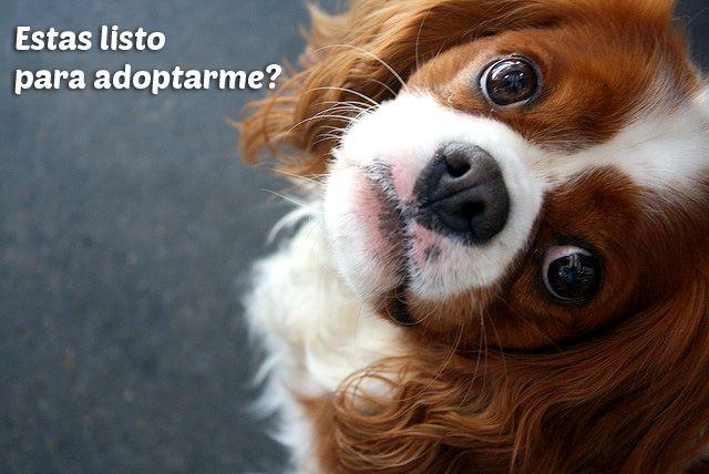 adoptar un perro cachorro